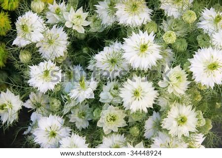 Candid white meadow flowers bouquet stock photo 34448924 shutterstock candid white meadow flowers in a bouquet mightylinksfo