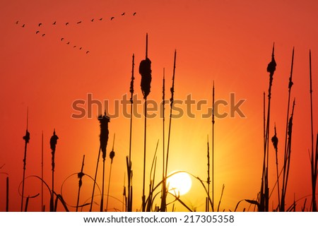 cane and grass sunset - stock photo