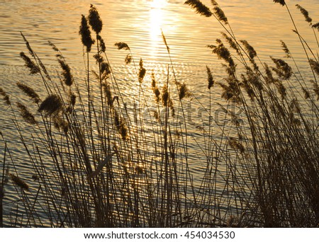 Cane on a background of water with the sun's path at sunset, sun reflection - stock photo