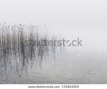 Canes growing from the water at the lake shore on a misty day - stock photo