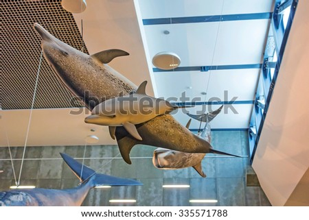Canical, Portugal - June 5, 2013: Museu da Baleia (Whale Museum). Swimming dolphins. The museum documents the history of whale hunting on Madeira. - stock photo