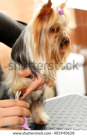 Canine hairdresser cutting dog's nails in salon