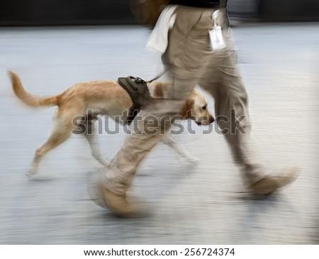 canine service dog on a city street - stock photo