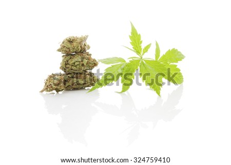 Cannabis bud and leaves isolated on white background. Traditional herbal medicine, alternative medicine.  - stock photo