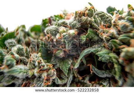 cannabis bud background, trichomes marijuana plants, cultivation of medicinal plants indoors and outdoors