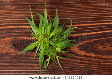 Cannabis buds and foliage on brown wooden table. Medical marijuana, alternative medicine.  - stock photo