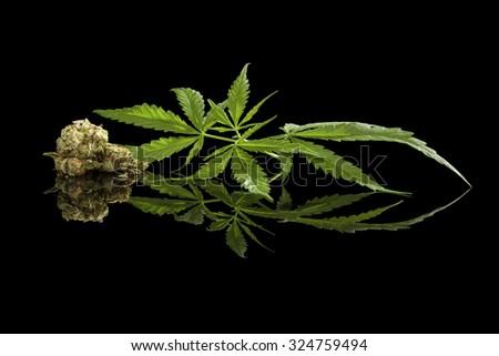 Cannabis foliage and bud isolated on black background. Alternative medicine. - stock photo
