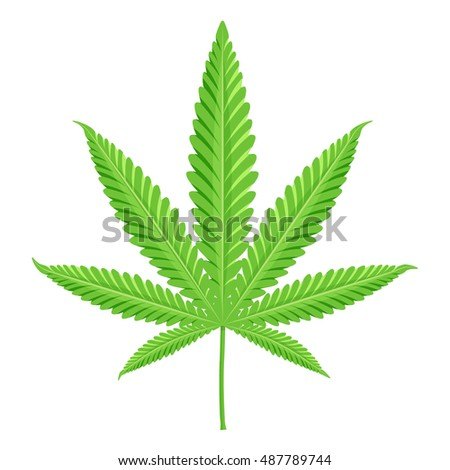 Cannabis illustration. Marijuana isolated on white background