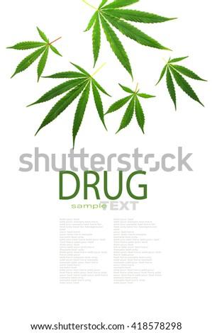 Cannabis leaf, marijuana isolated on white background with copy space - stock photo