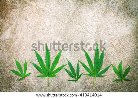 Cannabis leaf, marijuana over grainy texture background copy space - stock photo