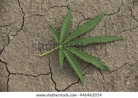 Cannabis leaf on cracked earth background - stock photo