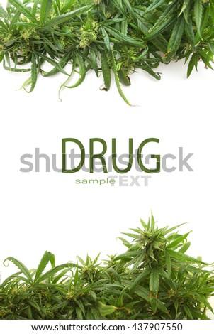 Cannabis leaf or marijuana over white background - stock photo