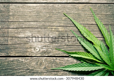 cannabis leaves on old wooden background - stock photo
