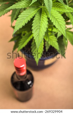 Cannabis plant and bottle of alcohol. - stock photo