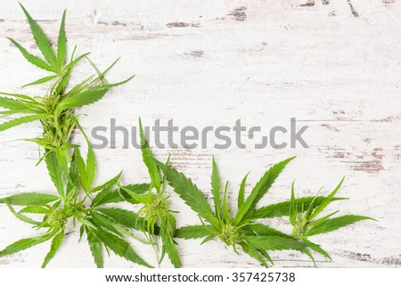 Cannabis with copy space. Buds and leaves on white wooden rustic table. Medical marijuana, alternative medicine.  - stock photo