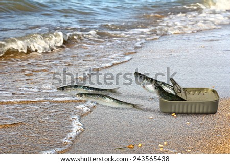 Canned sardines fleeing from cans and seek refuge in the sea - stock photo
