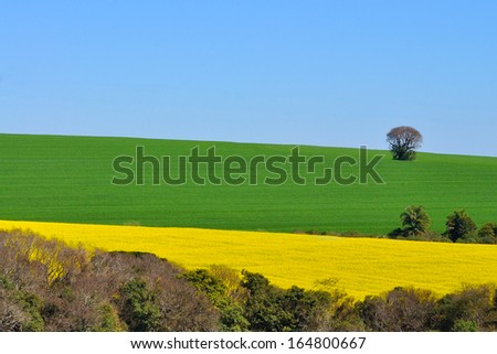canola and  soybean plantation