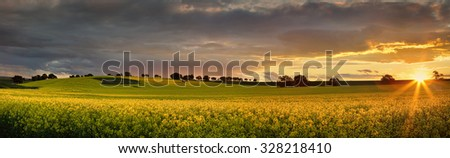 Canola farmlands  in rural Central West of NSW  at sunset, the last rays spread their warm light on the golden canols. Panorama - stock photo