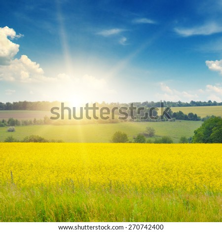 canola field and blue sky - stock photo