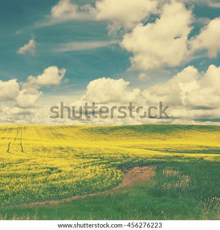 Canola field.  Clouds and blue sky background. Instagram effects.