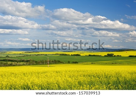 Canola field in bloom in British Columbia Peace River District