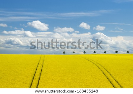Canola Field in Europe - stock photo
