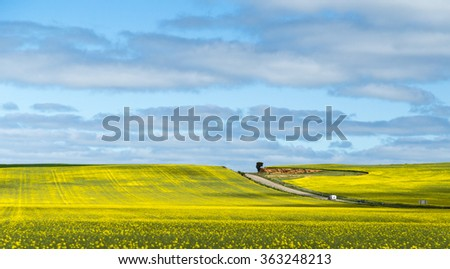 Canola fields in Nsw Australia between Hay and Mildura