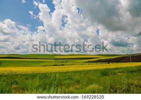 canola flowers in prairie, Inner-Mongolia, China - stock photo