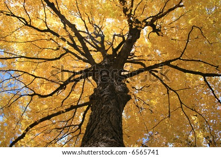 Maple Tree Bark Stock Images Royalty Free Images