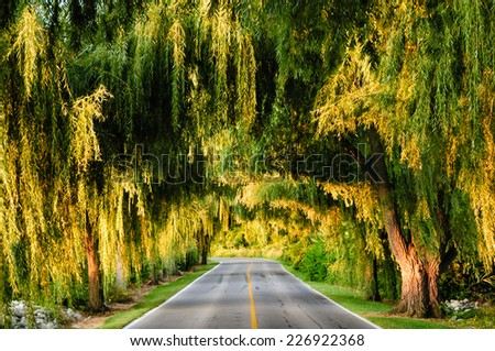 Canopy of trees over a lonely road, Sandusky, Ohio, USA. - stock photo