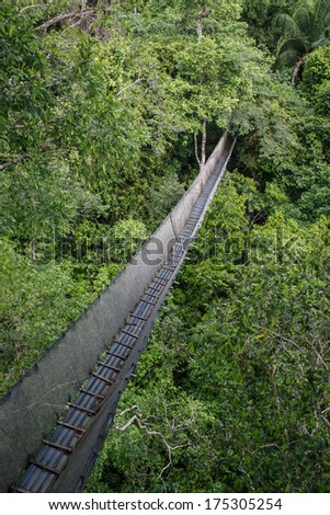 Canopy Walkway in the amazon forest, in tambopata national park, Peru. - stock photo