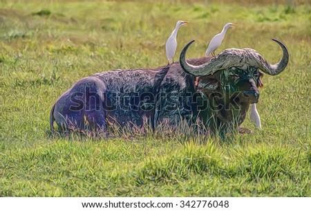 Cape Buffalo lying on African plain,digital oil painting - stock photo