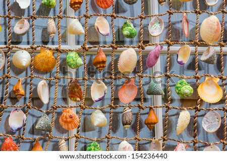 Cape Cod Shells - stock photo