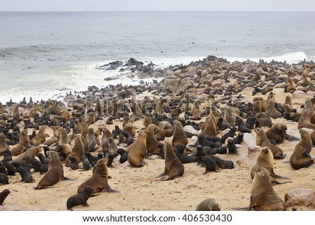 Cape Cross Seal Reserve, Skeleton Coast, Swakopmund, Namibia, Africa.