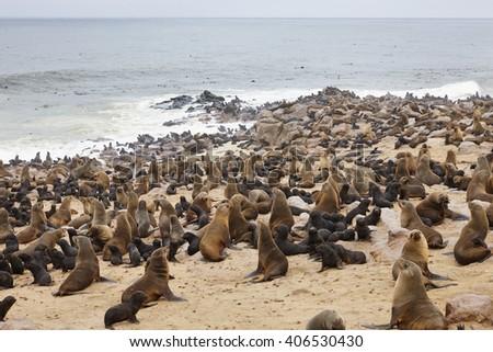 Cape Cross Seal Reserve, Skeleton Coast, Swakopmund, Namibia, Africa. - stock photo