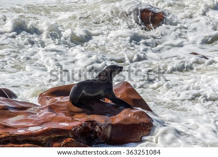 Cape Fur Seals on Cape Cross - Namibia, Africa - stock photo