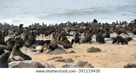 Cape fur seals on the stone coast of Atlantic ocean. Seal colony on the Cape Cross, Skeleton Coast, Namibia. The biggest colony in the World - stock photo