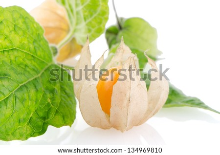 Cape gooseberry (physalis) fruit on white background.