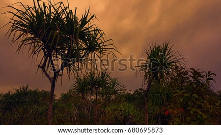 Cape York Australia pandanus trees in the sunset
