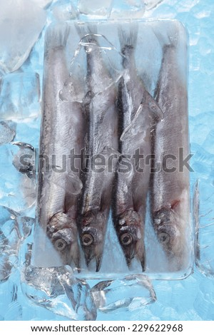 Capelin fishes in ice block - stock photo