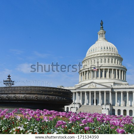 Capitol Building in Washington DC, with tulips in the foreground in spring.  - stock photo