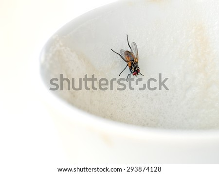 Cappuccino shared with fly. Public health, hygiene issue. - stock photo