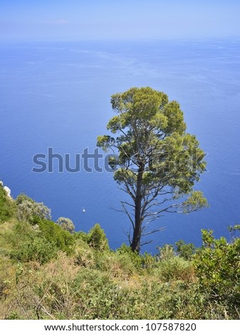 Capri Island - trees on the cliffs - stock photo
