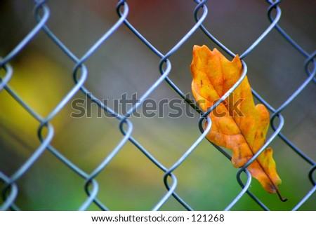 Captive leafe - stock photo