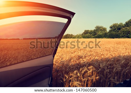 car in wheat field with opened door and blurred trees on background - stock photo