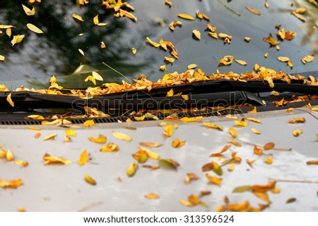 Car's windshield with autumnal leaves closeup photo - stock photo