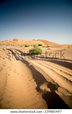 Car track in the sand desert. Nobody, vertical