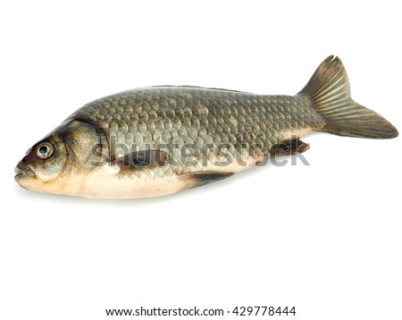 Carassius - crucian carp on a white background