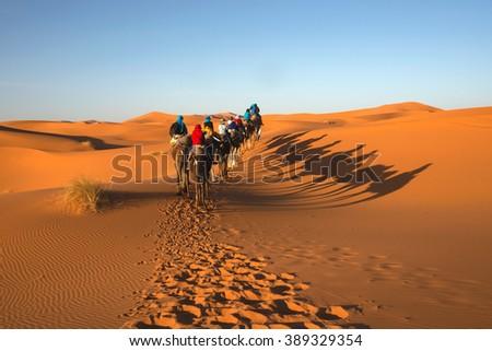Caravan going through the sand dunes in the Sahara Desert, Morocco - stock photo
