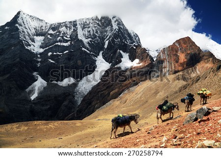 Caravan in Cordiliera Huayhuash, Peru, South America - stock photo